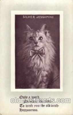 cat001369 - Cat Cats, Post Card, Post Card