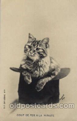 cat001381 - Cat Cats, Post Card, Post Card