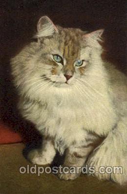 cat001389 - Cat Cats, Post Card, Post Card