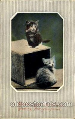 cat001407 - Cat Cats, Post Card, Post Card
