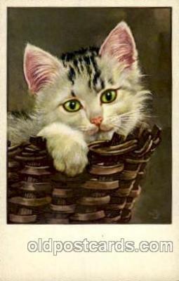cat001414 - Cat Cats, Post Card, Post Card