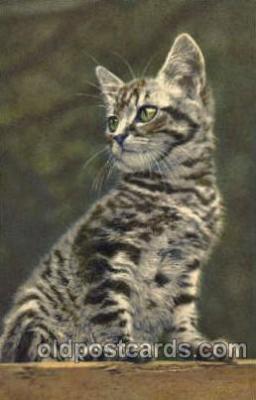 cat001415 - Cat Cats, Post Card, Post Card