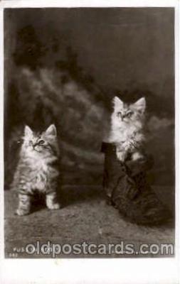cat001424 - Cat Cats, Post Card, Post Card