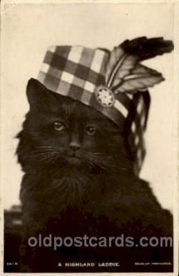 cat001427 - Cat Cats, Post Card, Post Card