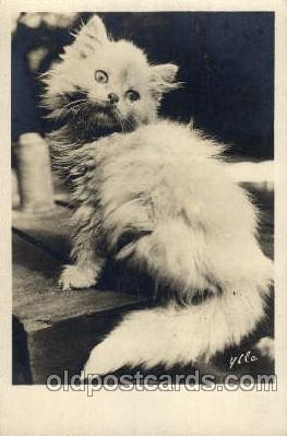 cat001434 - Cat Cats, Post Card, Post Card