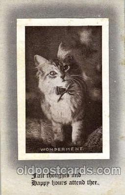 cat001447 - Cat Cats, Post Card, Post Card