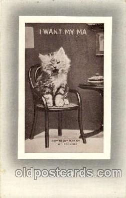 cat001450 - Cat Cats, Post Card, Post Card
