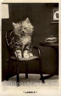 cat001458 - Cat Cats, Post Card, Post Card