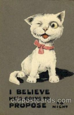 cat001462 - Cat Cats, Post Card, Post Card
