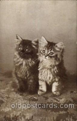 cat001471 - Cat Cats, Post Card, Post Card