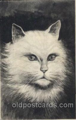 cat001472 - Cat Cats, Post Card, Post Card
