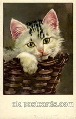 cat001494 - Cat Cats, Post Card, Post Card
