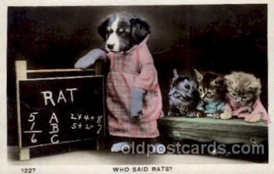 cat001533 - Cat Cats, Post Card, Post Card