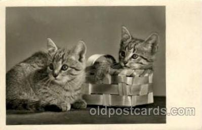 cat001540 - Cat Cats, Post Card, Post Card