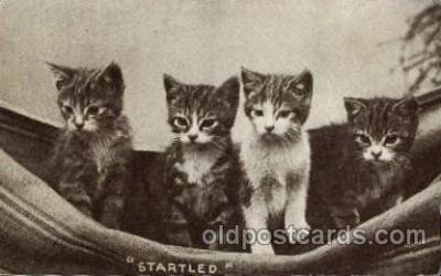 cat001545 - Cat Cats, Post Card, Post Card