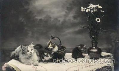 cat001555 - Cat Cats, Post Card, Post Card