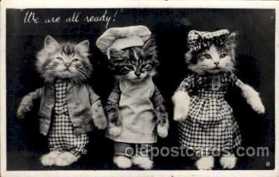 cat001577 - Cat Cats, Post Card, Post Card
