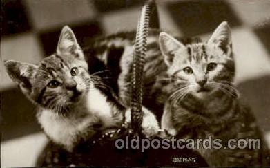 cat001587 - Cat Cats, Post Card, Post Card