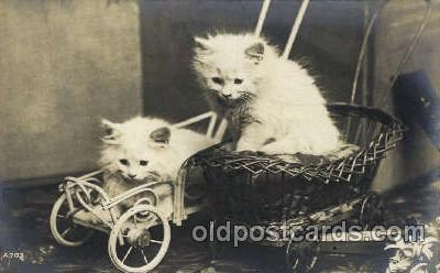 cat001591 - Cat Cats, Post Card, Post Card