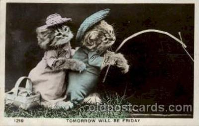 cat001597 - Cat Cats, Post Card, Post Card