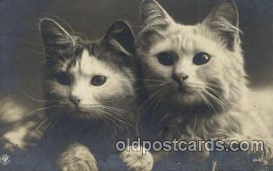 cat001598 - Cat Cats, Post Card, Post Card