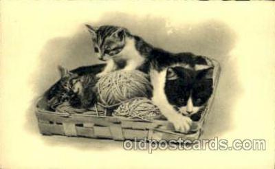 cat001602 - Cat Cats, Post Card, Post Card
