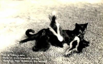 cat001613 - Cat Cats, Post Card, Post Card