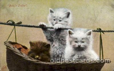 cat001634 - Cat Cats, Post Card, Post Card