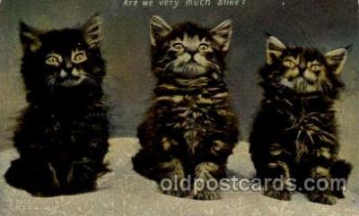 cat001643 - Cat Cats, Post Card, Post Card