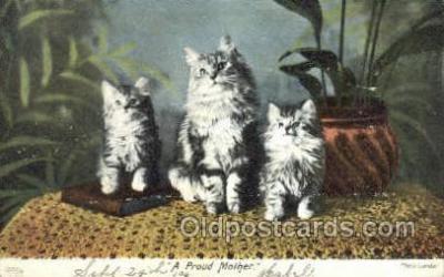 cat001646 - Cat Cats, Old Vintage Antique Postcard Post Card