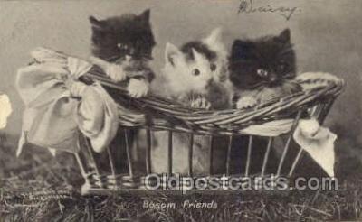 cat001647 - Cat Cats, Old Vintage Antique Postcard Post Card