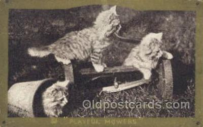 cat001673 - Cat Cats, Old Vintage Antique Postcard Post Card