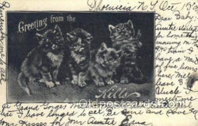 cat001678 - Cat Cats, Old Vintage Antique Postcard Post Card