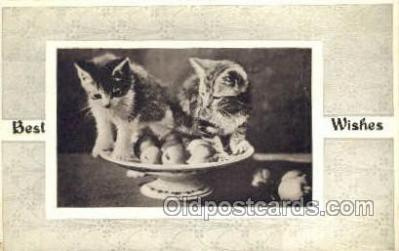 cat001683 - Cat Cats, Old Vintage Antique Postcard Post Card