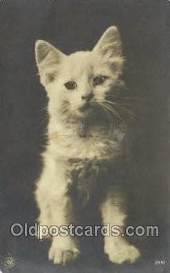 cat001723 - Cat Cats, Old Vintage Antique Postcard Post Card