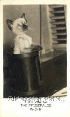 cat001729 - Cat Cats, Old Vintage Antique Postcard Post Card