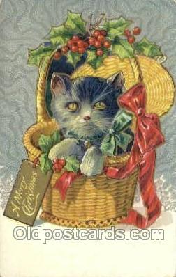 cat001734 - Cat Cats, Old Vintage Antique Postcard Post Card