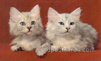 cat001757 - Cat Cats, Old Vintage Antique Postcard Post Card