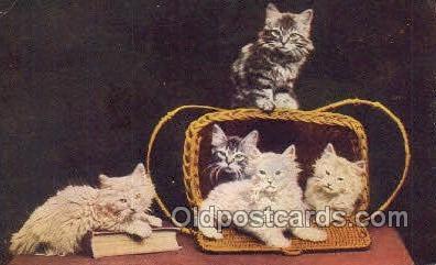 cat001770 - Cat Cats, Old Vintage Antique Postcard Post Card