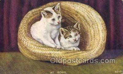cat001771 - Cat Cats, Old Vintage Antique Postcard Post Card