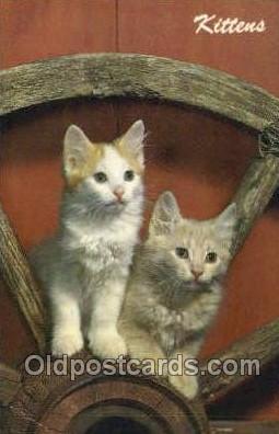 cat001815 - Cat Cats, Old Vintage Antique Postcard Post Card