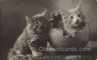 cat001825 - Cat Cats, Old Vintage Antique Postcard Post Card