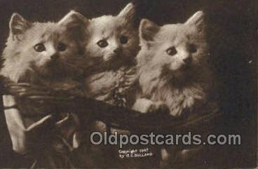 cat001827 - Cat Cats, Old Vintage Antique Postcard Post Card