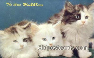 cat001883 - Chrome Cat Postcard, Post Card, Postales, Postkaarten, Kartpostal, Cartes, Postale, Postkarte, Ansichtskarte