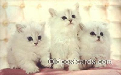 cat001886 - Chrome Cat Postcard, Post Card, Postales, Postkaarten, Kartpostal, Cartes, Postale, Postkarte, Ansichtskarte