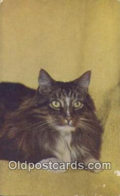 cat001893 - Chrome Cat Postcard, Post Card, Postales, Postkaarten, Kartpostal, Cartes, Postale, Postkarte, Ansichtskarte