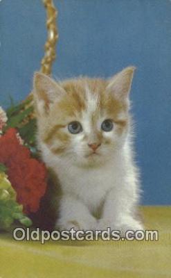 cat001894 - Chrome Cat Postcard, Post Card, Postales, Postkaarten, Kartpostal, Cartes, Postale, Postkarte, Ansichtskarte