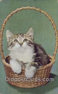 cat001900 - Chrome Cat Postcard, Post Card, Postales, Postkaarten, Kartpostal, Cartes, Postale, Postkarte, Ansichtskarte