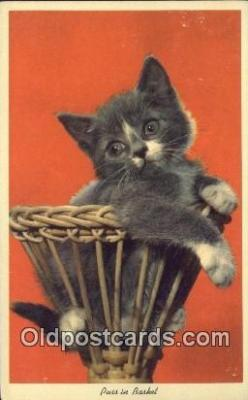 cat001901 - Chrome Cat Postcard, Post Card, Postales, Postkaarten, Kartpostal, Cartes, Postale, Postkarte, Ansichtskarte