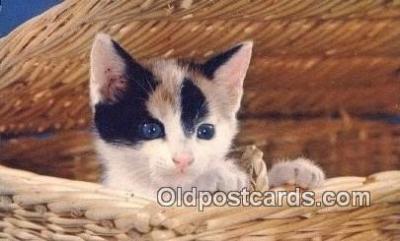 cat001911 - Chrome Cat Postcard, Post Card, Postales, Postkaarten, Kartpostal, Cartes, Postale, Postkarte, Ansichtskarte